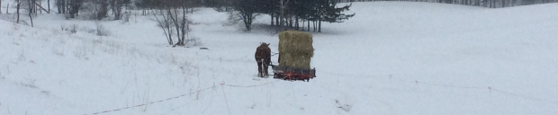 horses pulling sleigh full of hay through snow